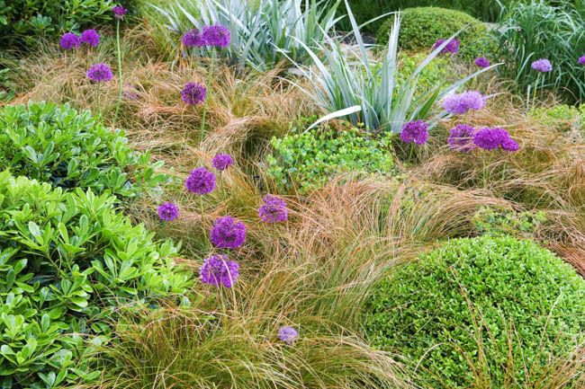 Garden ideas border ideas perennial planting perennial for Planting schemes with grasses