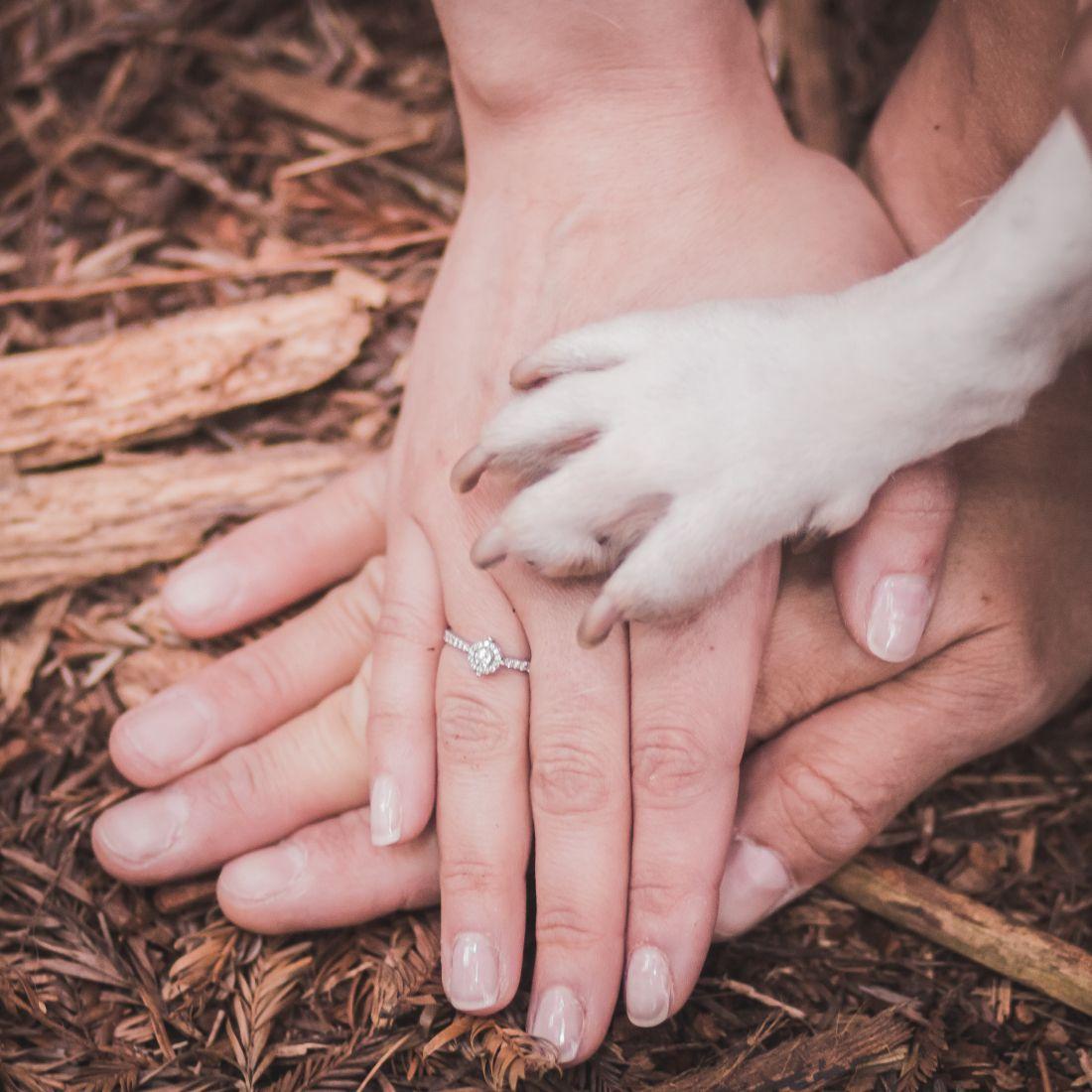 Trabajo en equipo. #preboda #wedding #mascotas #boda #bosque #forest ...
