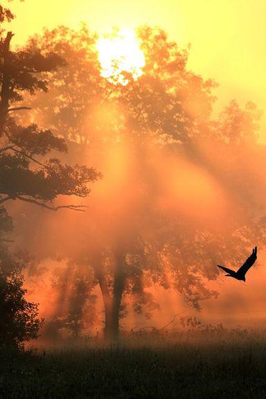 Raven Sunset, Warmbronn, Germany - Siediti ai bordi dell'aurora, per te si leverà il sole.  Siediti ai bordi della notte, per te scintilleranno le stelle.  Siediti ai bordi del torrente, per te canterà l'usignolo.  Siediti ai bordi del silenzio, Dio ti parlerà.. (L. Vahira)