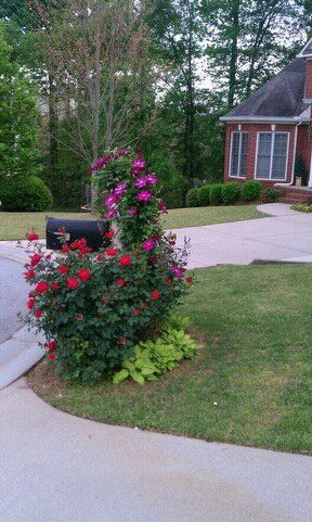 Photo of Mailbox flower bed. Clematis, knock out roses and hosta. Fail proof!