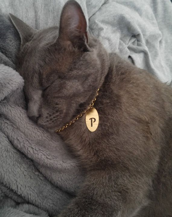 giving a cat a pill