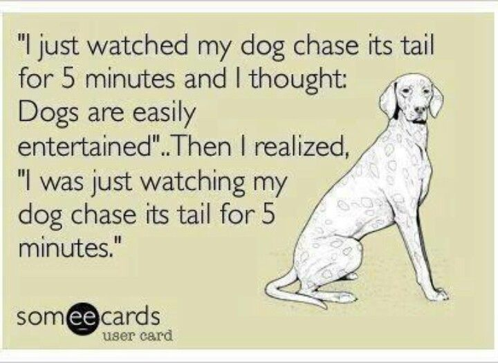 Chase His Tail Haha Funny