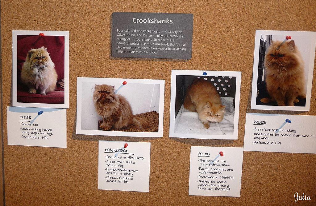 Image result for hermione granger's cat crookshanks