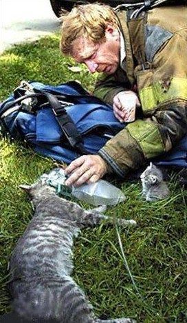 Fireman giving mum some air whilst baby kitten watches on