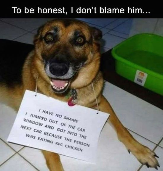 The Best Dog Shaming Pictures