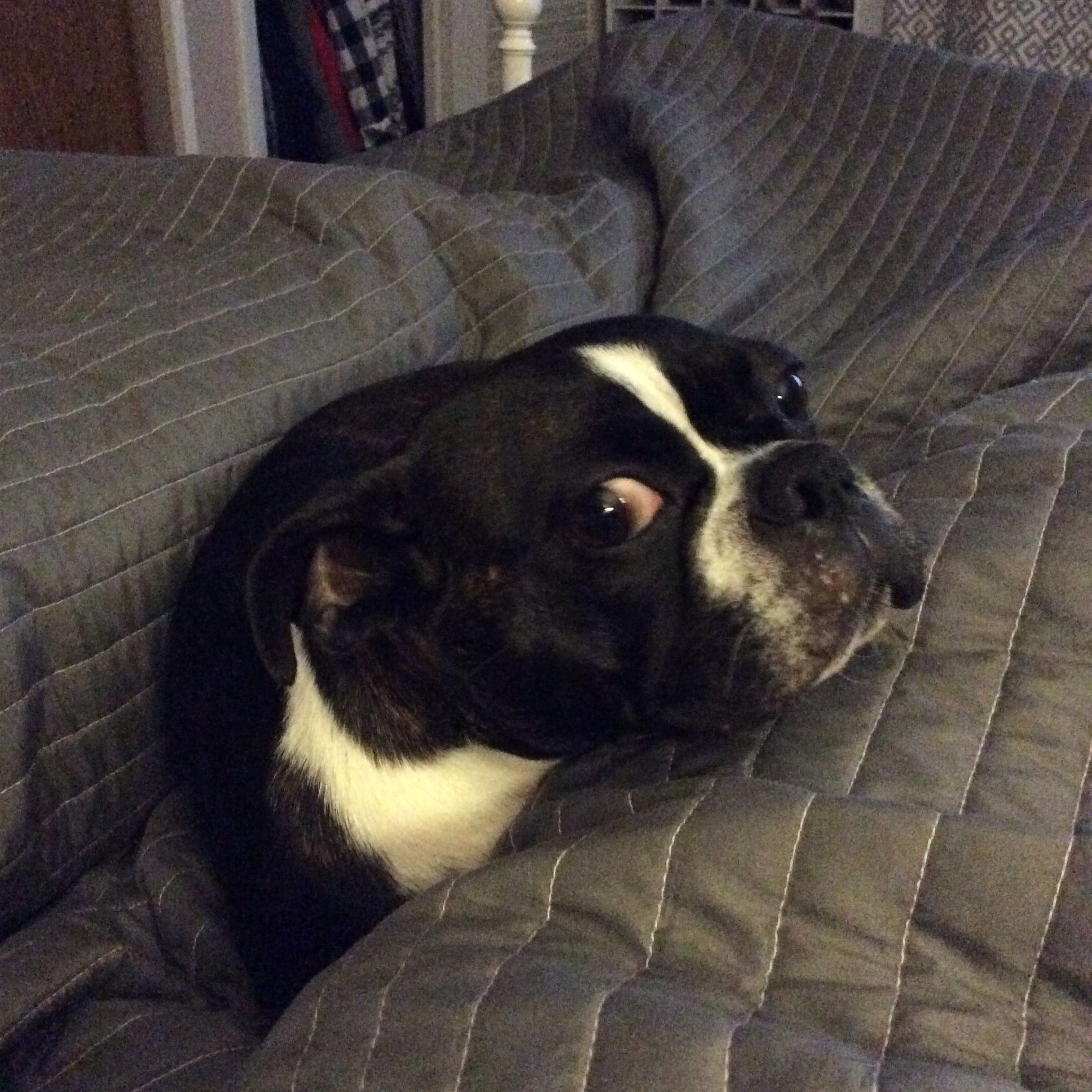"""""""Can I please stay in bed with you?"""" Bug the Boston"""