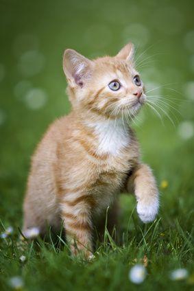 Hintergrundbilder Kostenlos Katzen