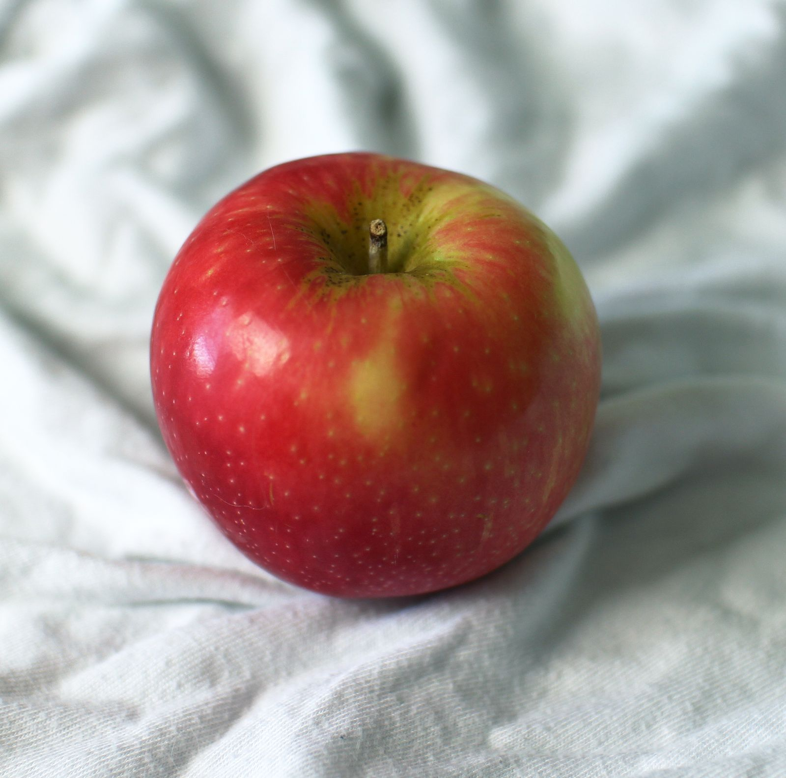 Free Apple Reference For Tutorial 사과 그림, 빨간 사과, 사과