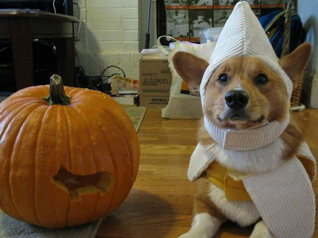 19 Corgis That Are Super Excited For Fall Pet Halloween Costumes