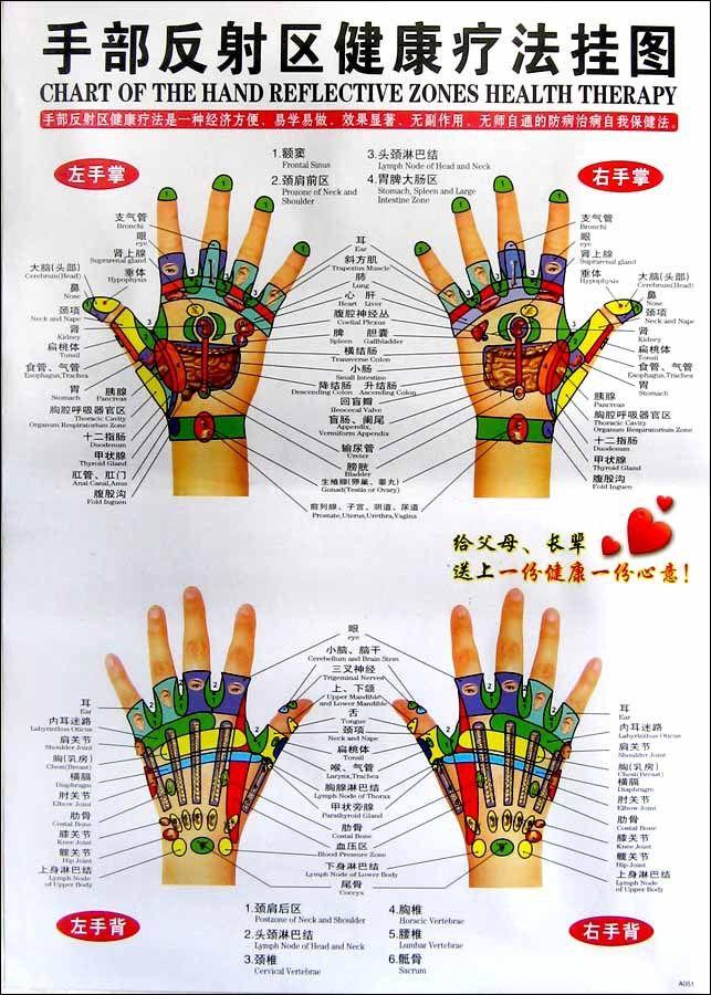 CHINESE-ENGLISH CHART HAND REFLECTIVE ZONES HEALTH THERAPY Reflexology MASSAGE zj349