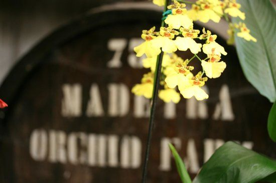 Madeira Orchid Farm, Funchal: Se 19 anmeldelser, artikler og 13 billeder fra Madeira Orchid Farm, nr.90 på TripAdvisor af 134 seværdigheder i Funchal.