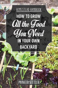 Check out How to Grow All The Food You Need In Your Backyard - Homestead Handbook at http://pioneersettler.com/homestead-handbook-grow-all-the-food-you-need-in-your-backyard/