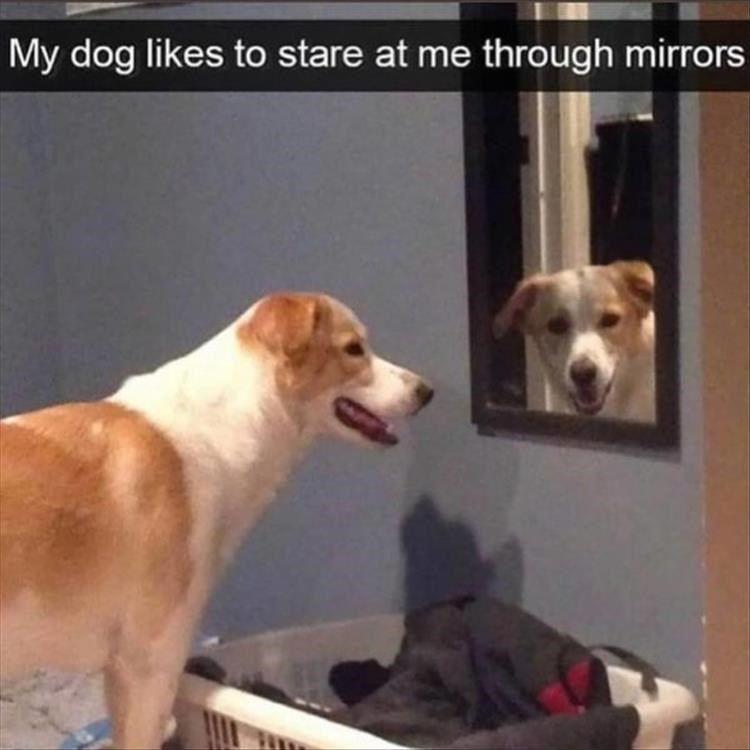 Heckin Good Doggo Memes 33 Memes Funny Animal Pictures Dog Memes Animals