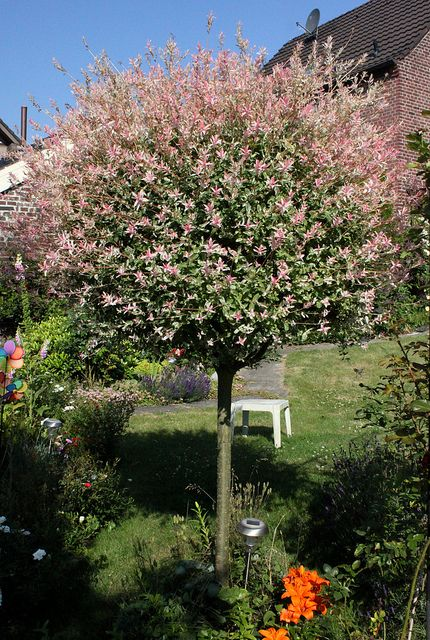 Harlekinweide Landscaping Trees Small Front Gardens Backyard Garden Landscape