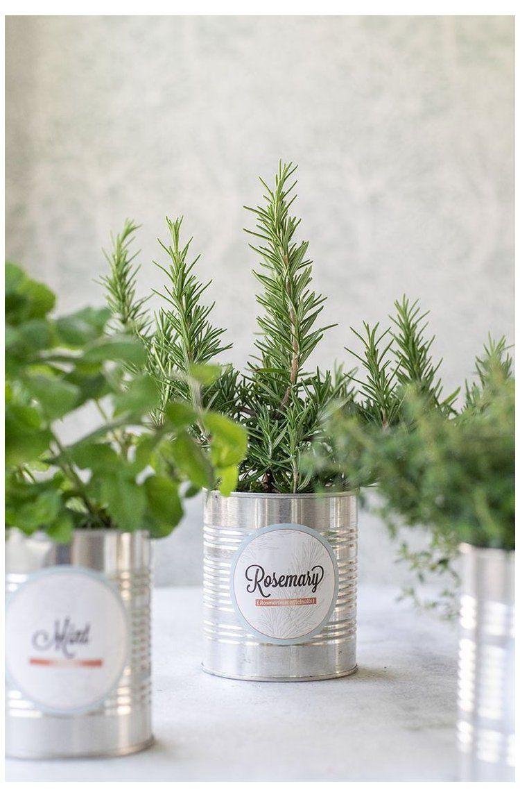 Photo of DIY Indoor Herb Garden #indoorgarden