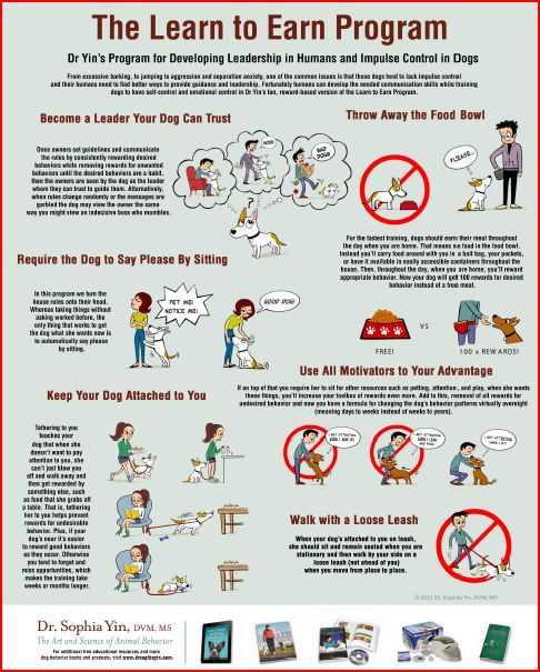 Free Downloads Posters Handouts And More Dog Training Dog