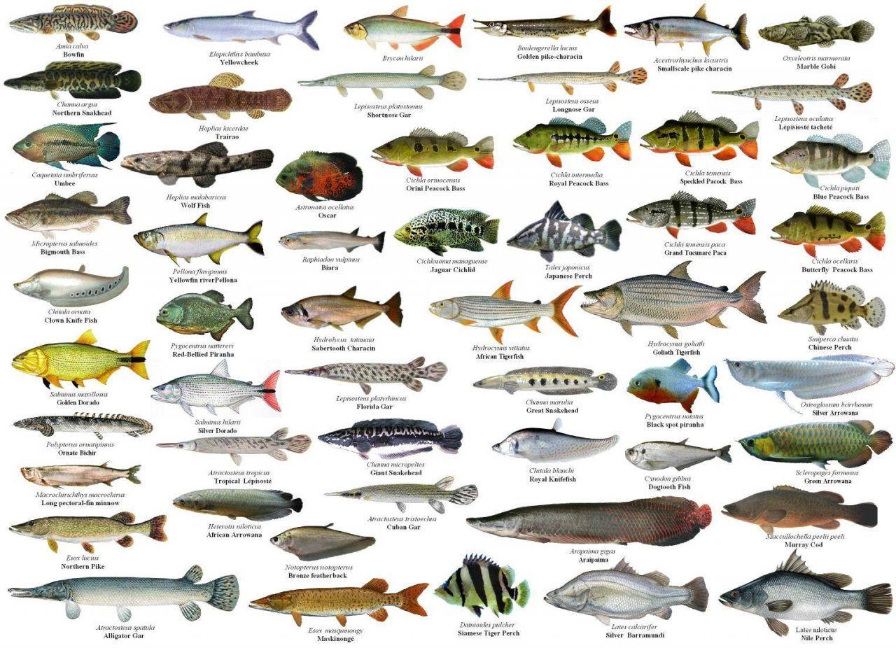 русские рыбы картинки с названиями ударопрочного пластика