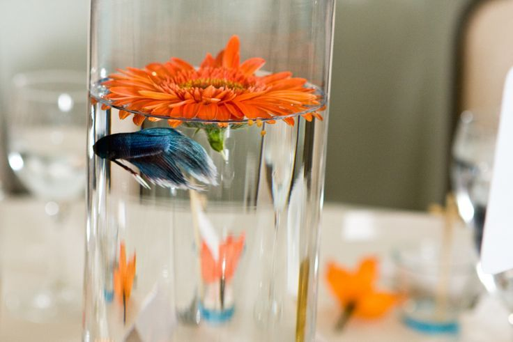 Fish wedding centerpiece except with purple and yellow for Beta fish centerpiece
