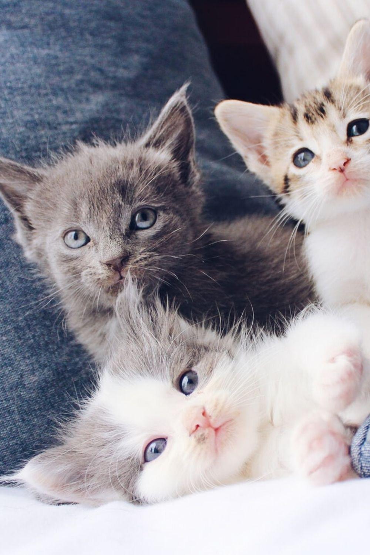 Suche nach Tag: cat coxx