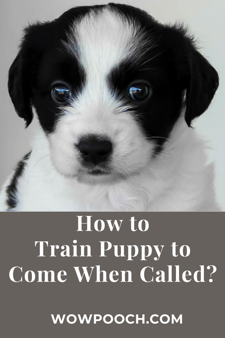692614cbba1203985fcb550b967184c8 - How Do You Get A Puppy To Come When Called