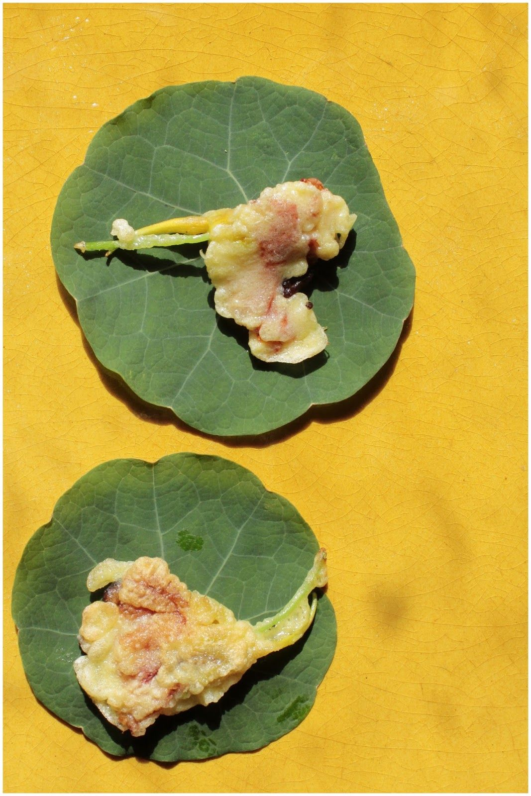 Brzuch Posypany Makiem Ogrod W Ciescie Plant Leaves Plants Leaves