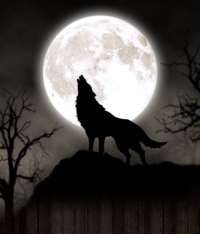 Full Moon Wolf Artwork Wolf Silhouette Wolf Painting