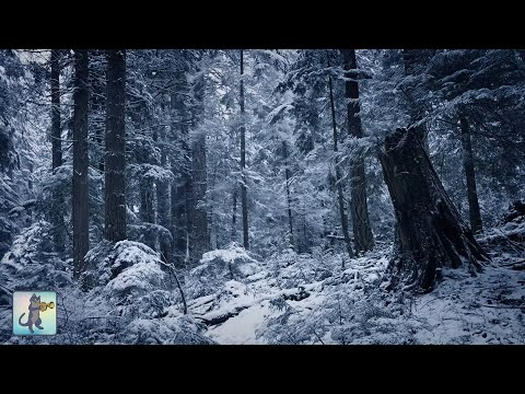 Beautiful Falling Heavy Snow The Best Relaxing Meditation Music Youtube Snow Meditation Music Relaxing Music