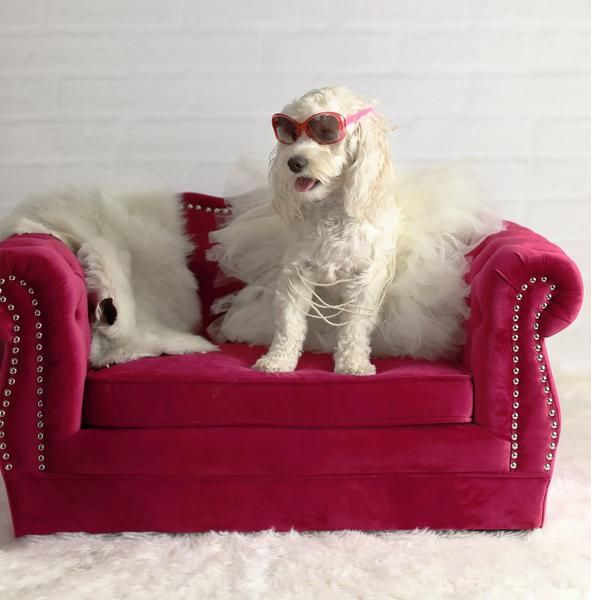 Buy Tov Furniture Tov P2038 H Yorkshire Pink Pet Bed Pet