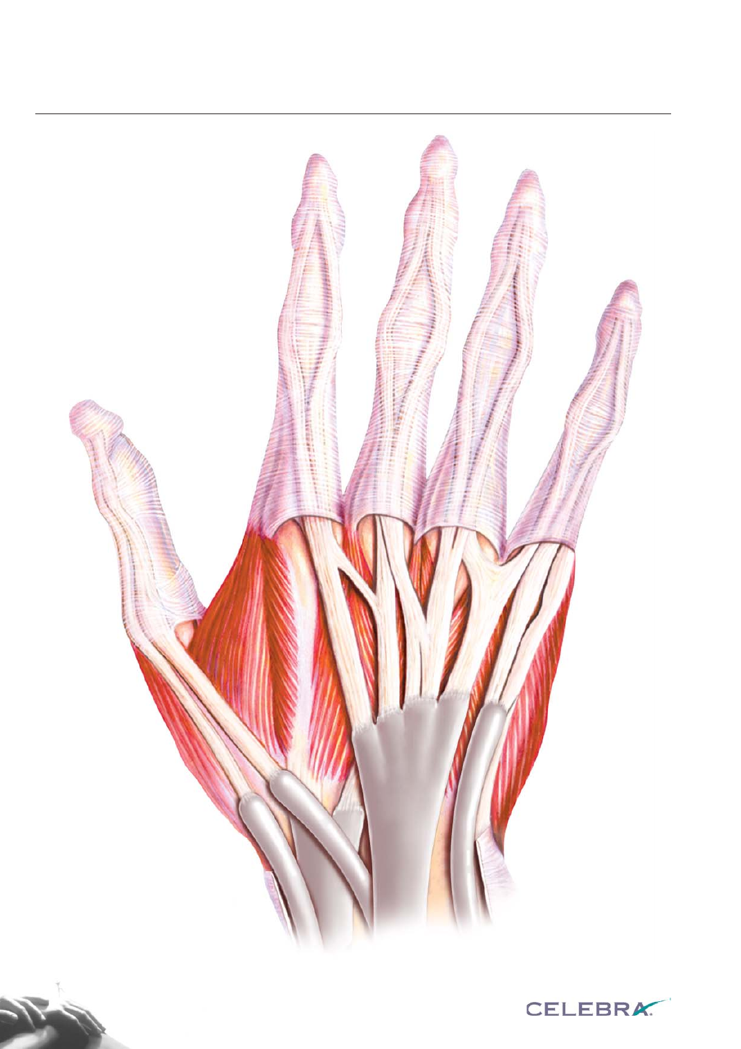 back of the hand muscles | Anatomy | Pinterest | Muscles, Hand ...