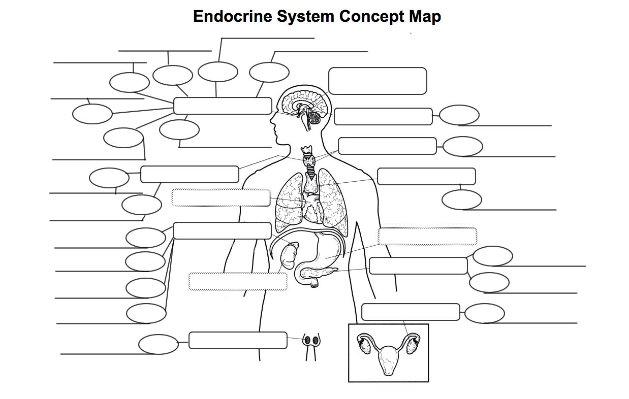 Endocrine System Diagram Worksheet . Endocrine System ...