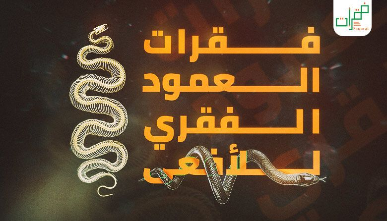 عدد فقرات العمود الفقري للأفعى Arabic Calligraphy Calligraphy