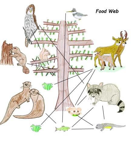 Food web/ great website for lessons on nature | science ...