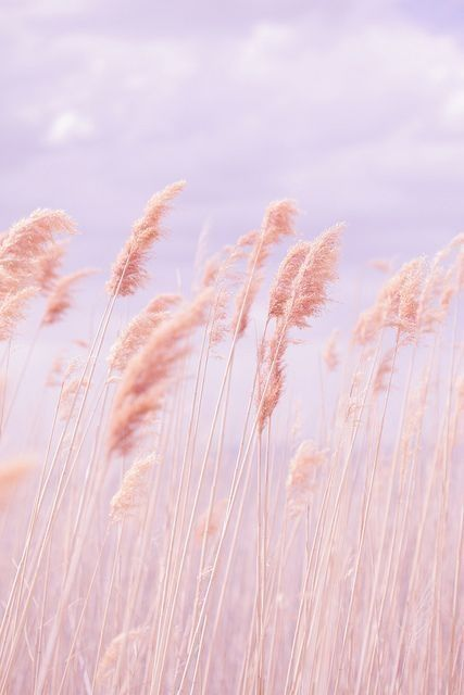 Pretty Pastels Pastel Pink Aesthetic Poppy Photography Pastel Beach