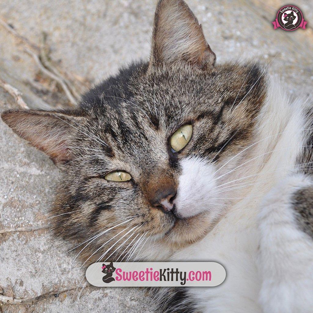 "Free Ebook €� €�top 10 Cat Breeds"""
