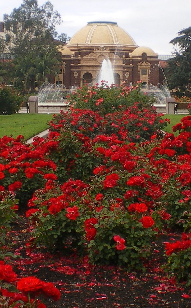 Exposition Park Rose Garden | Travel | Vacation Ideas | Road Trip ...
