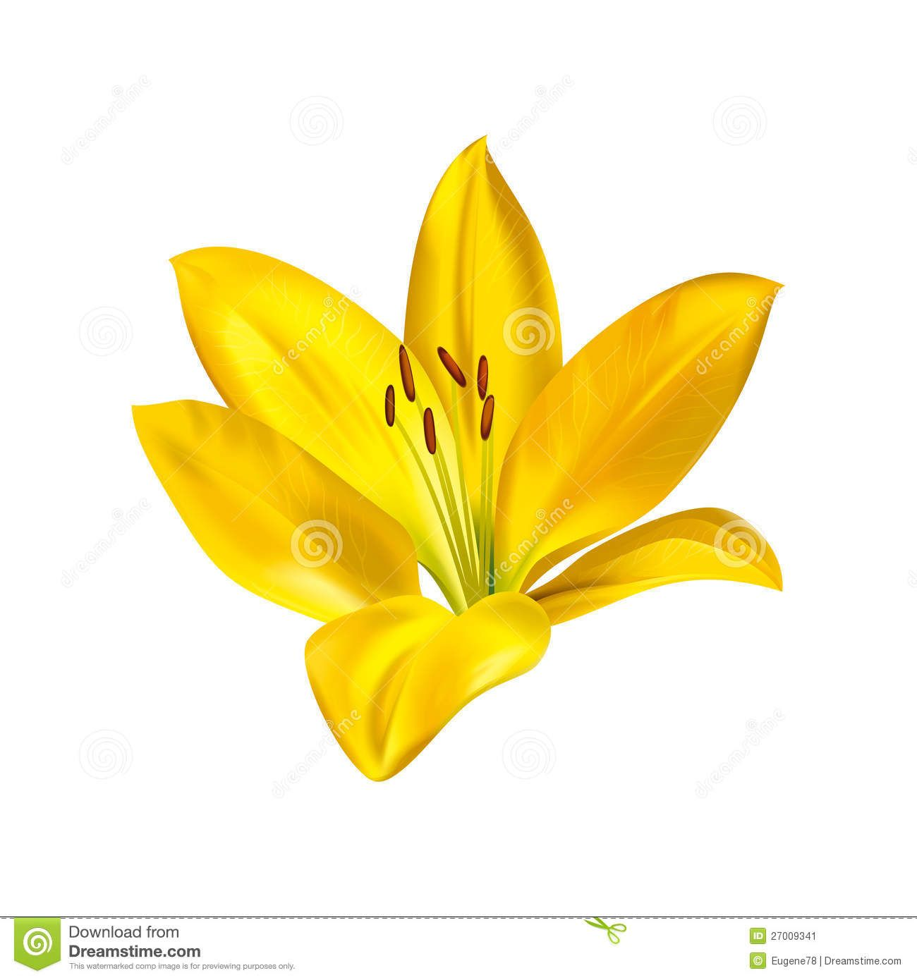 Yellow lily flower stock flower images pinterest flower and orchid yellow lily flower izmirmasajfo
