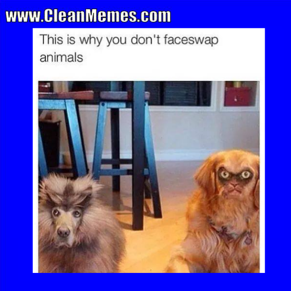 Clean Memes The Best The Most Online Clean memes and
