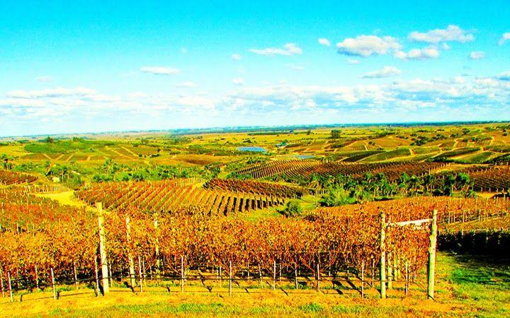 VinumMedia #winelover: Com o georreferenciamento de 100% da produção viní...