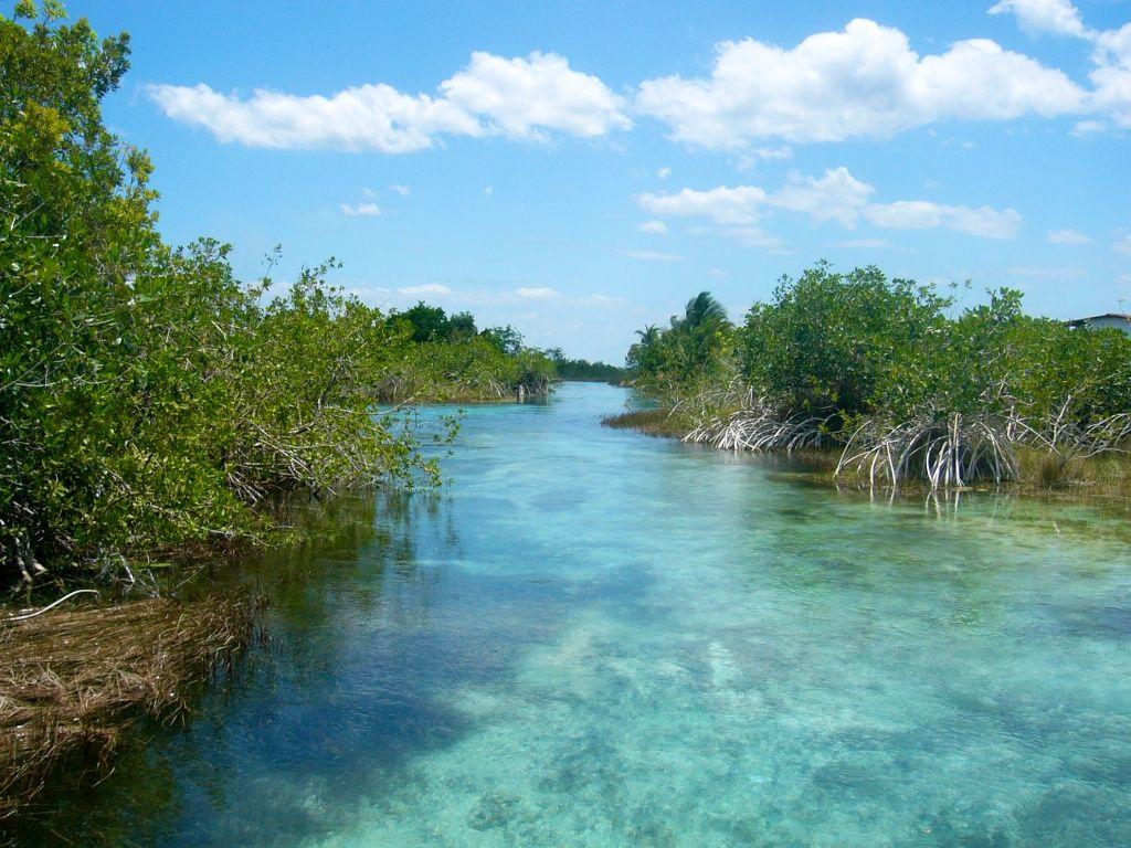 Manglares De Laguna Bacalar Quintana Roo Mexico Mexico Pinterest Quintana Roo Central