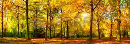 árbol: magnífico panorama del paisaje de otoño de un bosque escénica con mucho sol caliente