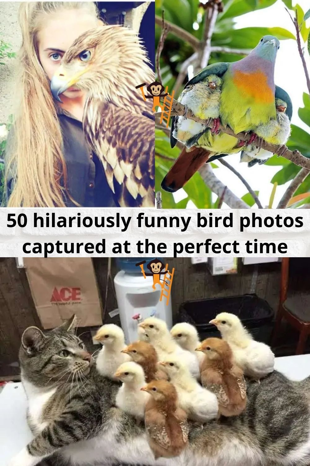50 Hilariously Funny Bird Photos Captured At The Perfect Time Funny Birds Funny Funny Memes