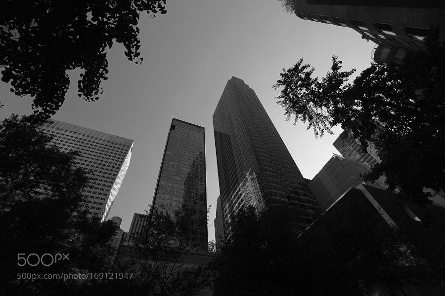 Skyscraper Garden by LindaEdgecombPhotography