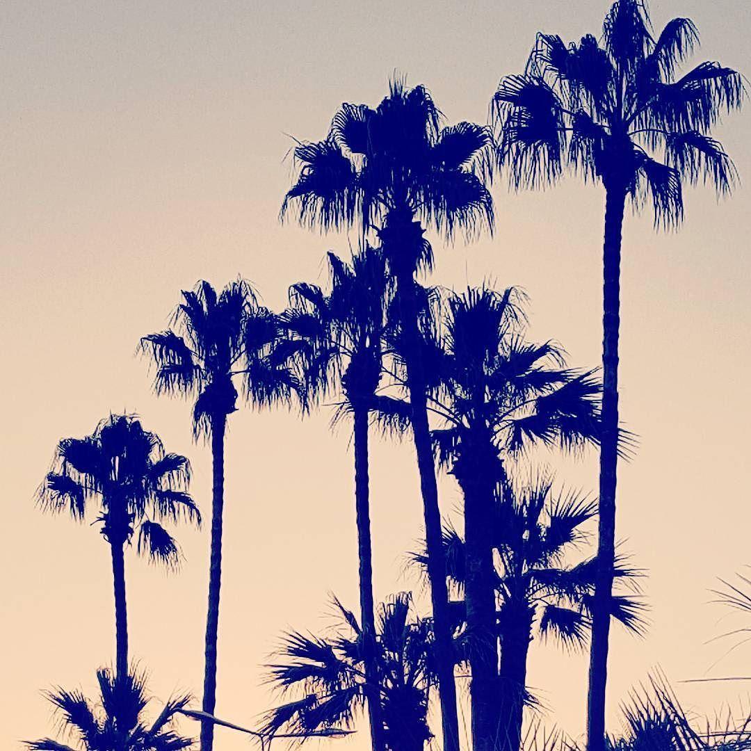 Coucher de soleil  #palmier #palm #sunset #vacances #holidays #cotedazur #cannes #sky #twitter