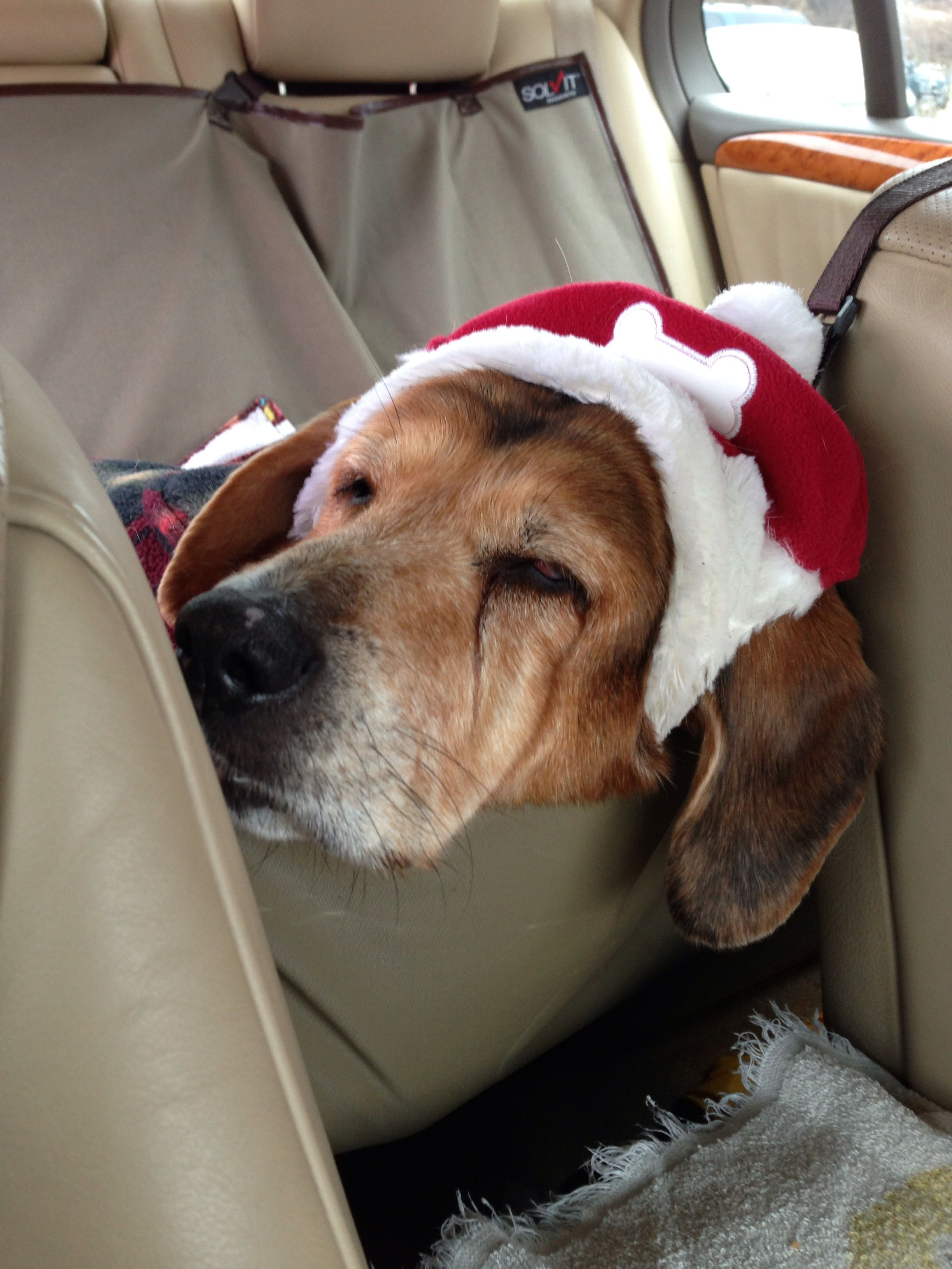 Dog tired at christmas labrador retriever best dogs dogs
