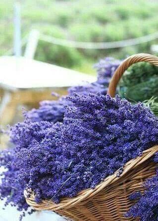 A basket full of lavender....