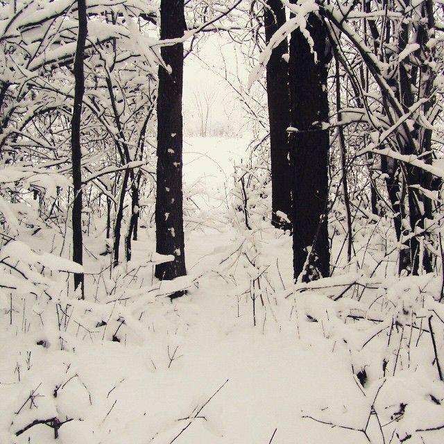 Our Johnson Preserve is a #WinterWonderland! #PureMichigan #LetItSnow