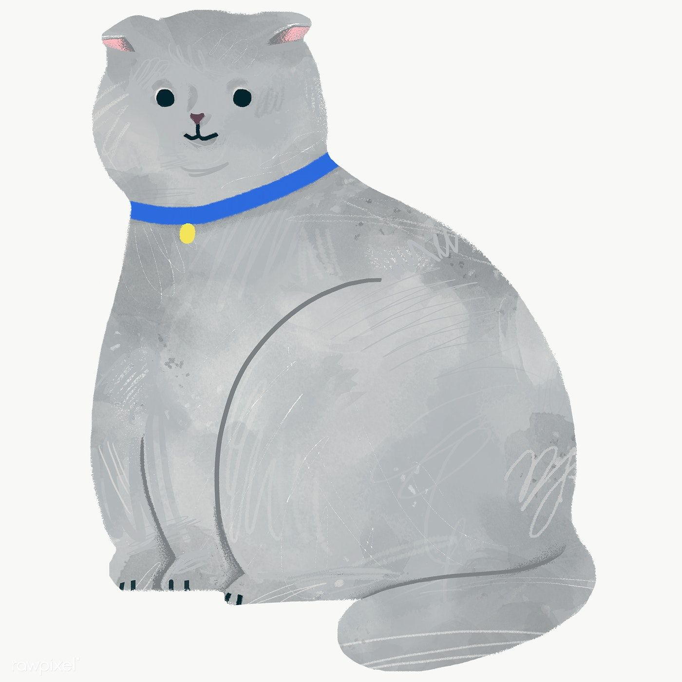Scottish Fold Cat On A Gray Background Transparent Png Free Image By Rawpixel Com Nunny Cat Vector Cat Scottish Fold Cat Illustration
