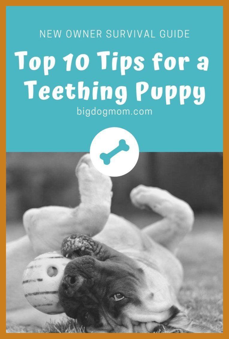 Dog Behavioral Problems Stop Puppy Biting Puppy Biting Tips How To Stop A Puppy From Bi Puppy Teething Puppy Biting Puppy Toys Teething