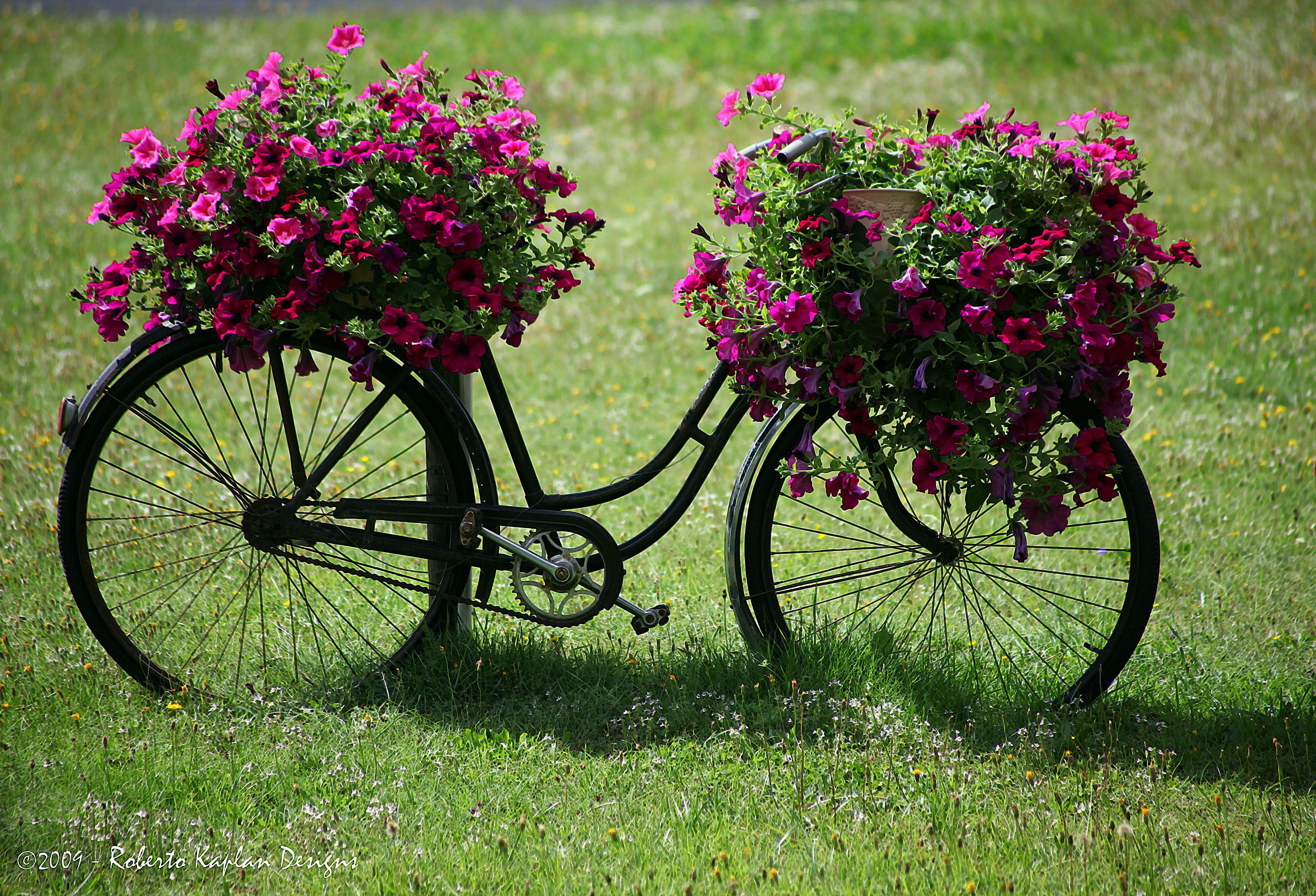 Garden decor bicycle   Where else but Austria Better watch my bicycle  Bikes