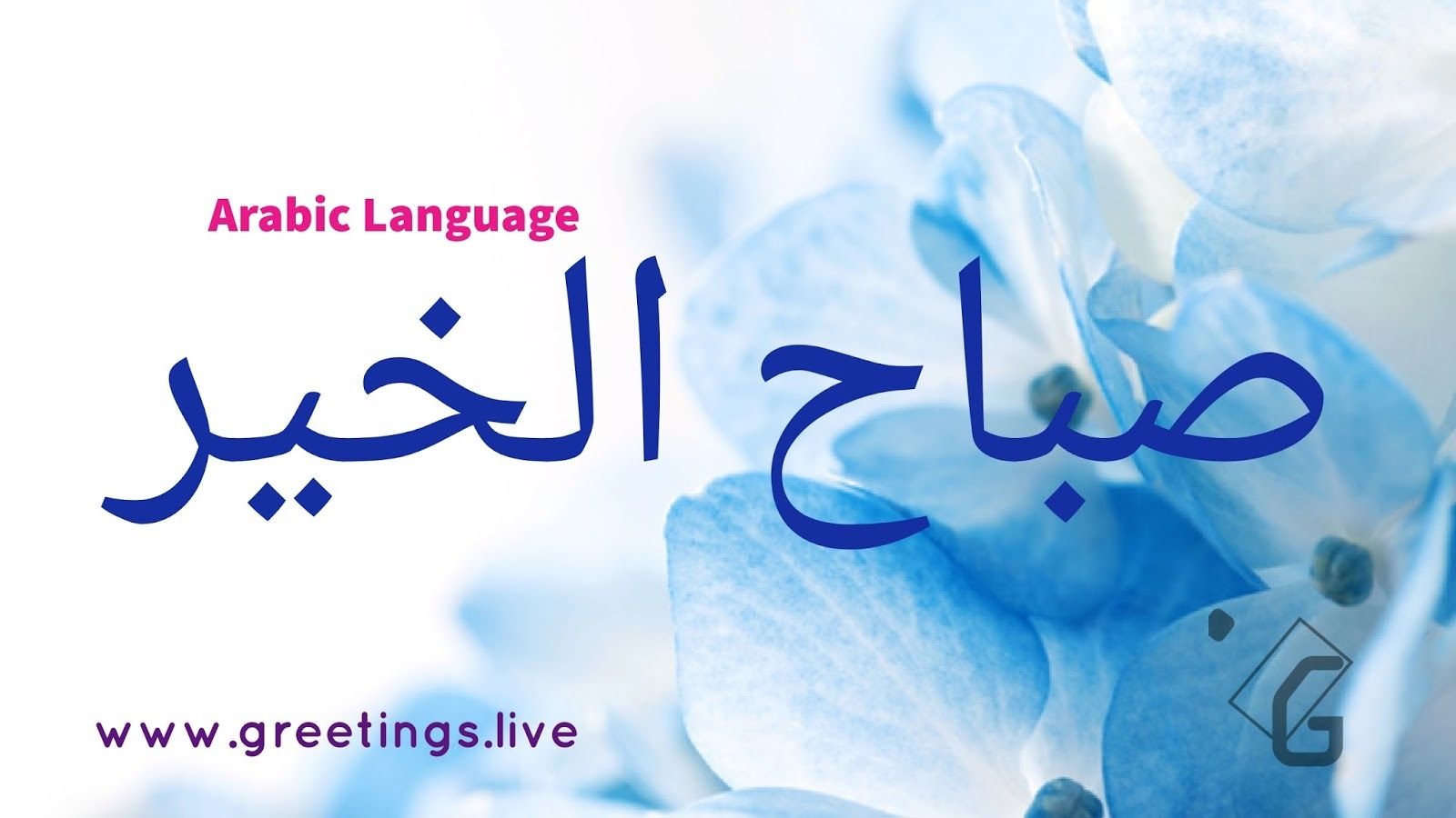 5 different scenery morning wishes in arabic language kristyandbryce Images